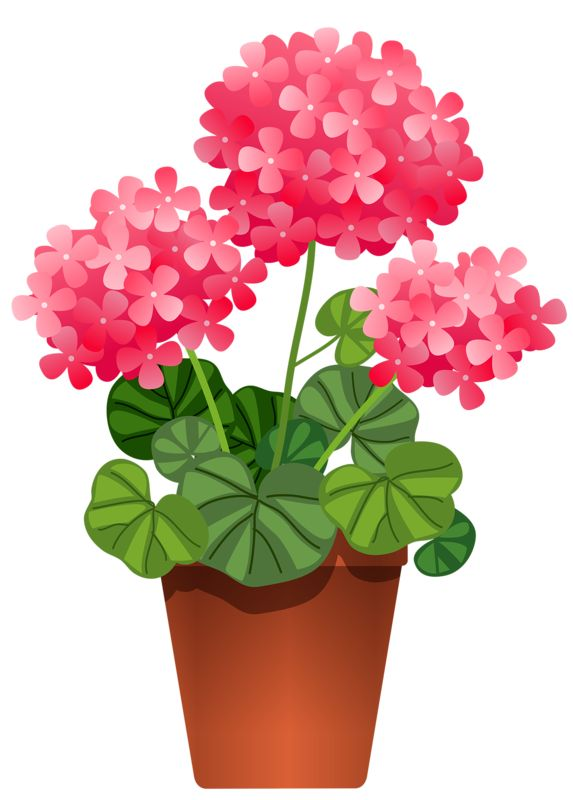 3d115cf613b9391a9b0021db4cd9c4e8--potted-flowers-art-flowers.jpg