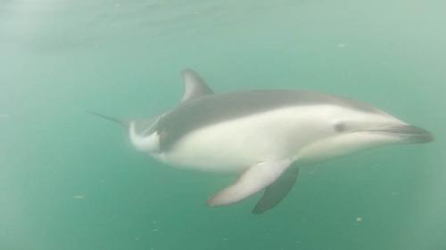 dauphins 8.jpg