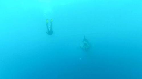 WHALE SHARK 5.jpg