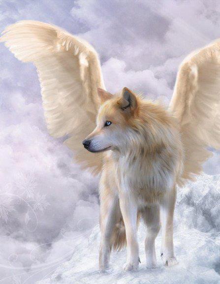 chien-ange-1.jpg