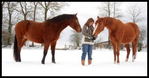 sophie chevaux.jpg