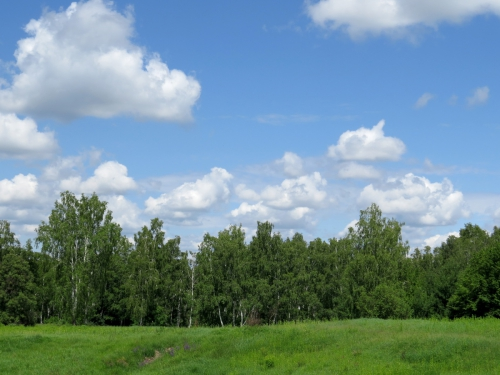 Fond-décran-sur-la-forêt-et-ciel-1385018829_39.jpg