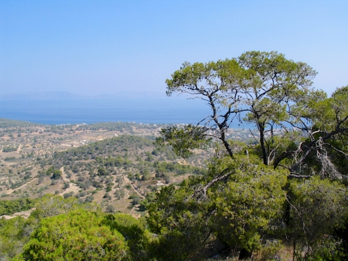 grèce rivage oliviers.jpg