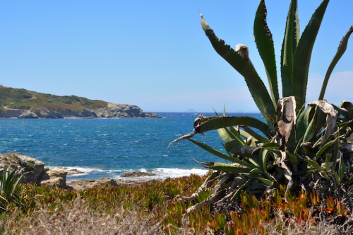 plage cactus.jpg