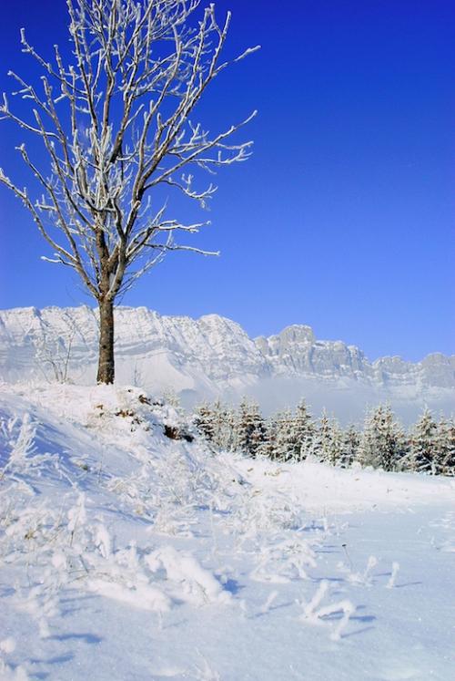 tresse hiver.jpg
