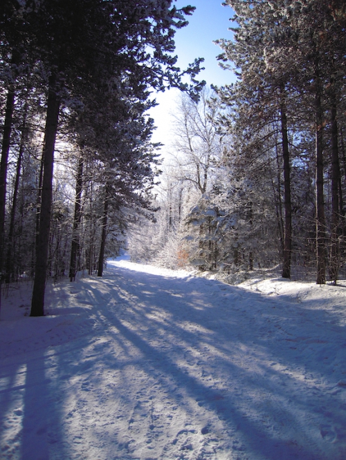 sous bois hiver 1.jpg