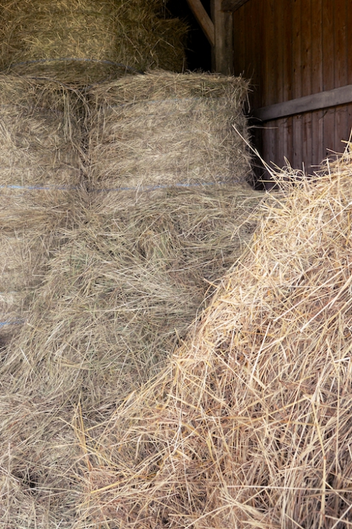 blés grange.jpg