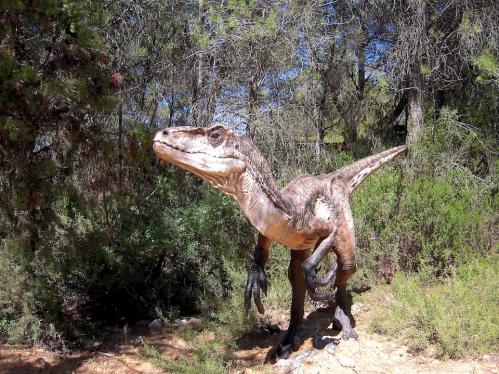 raptor 2.jpg