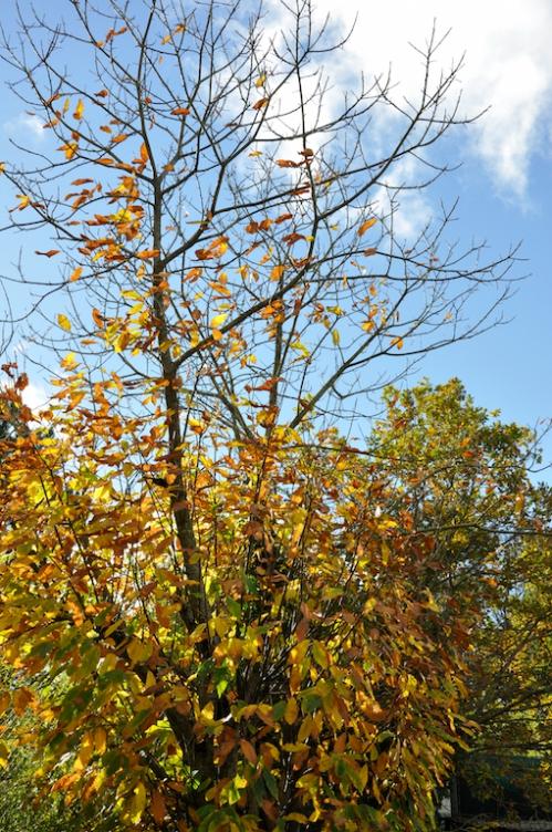 loudéac automne.jpg