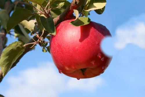 pomme mac.jpg