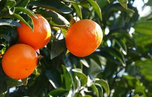 orange mac.jpg