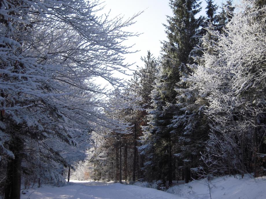 neige 25.jpg