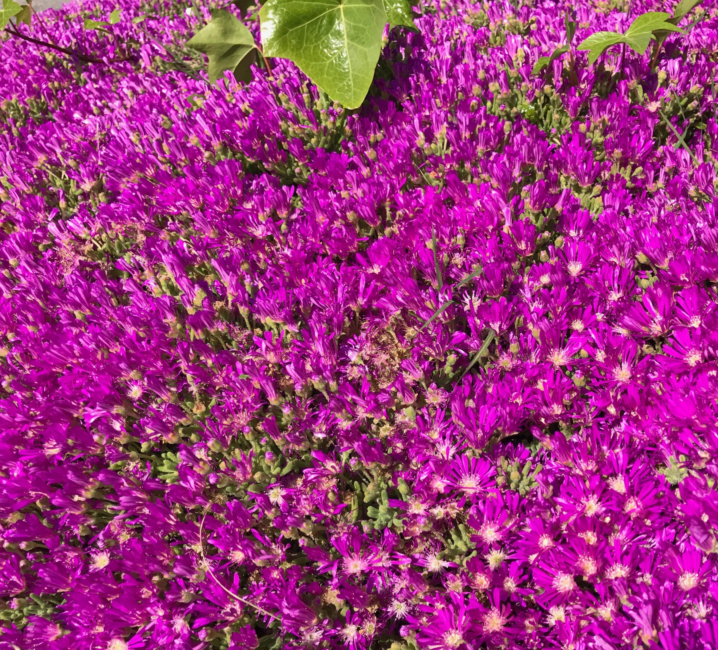 fleurs roses 2.jpg