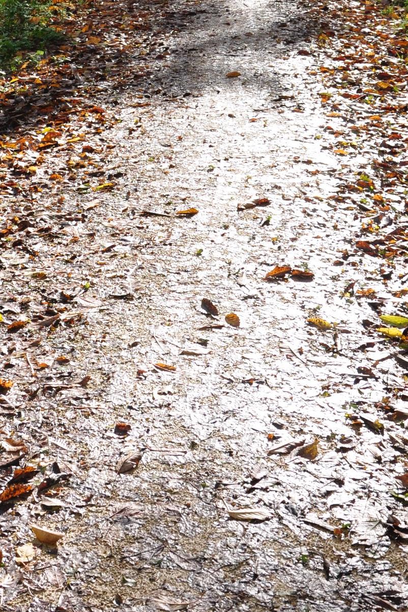 feuilles chemin