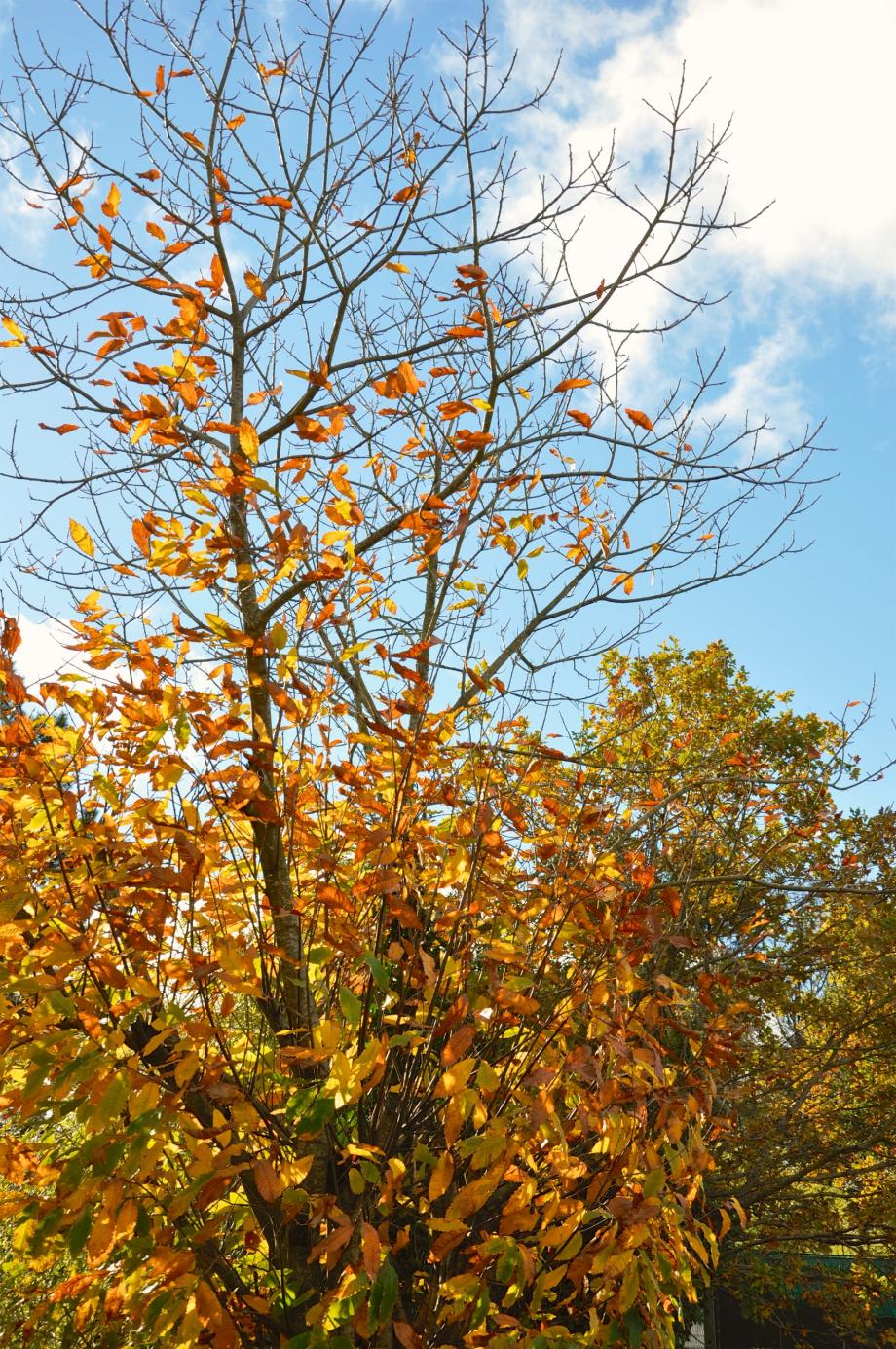 feuilles-mortes-arbre-3