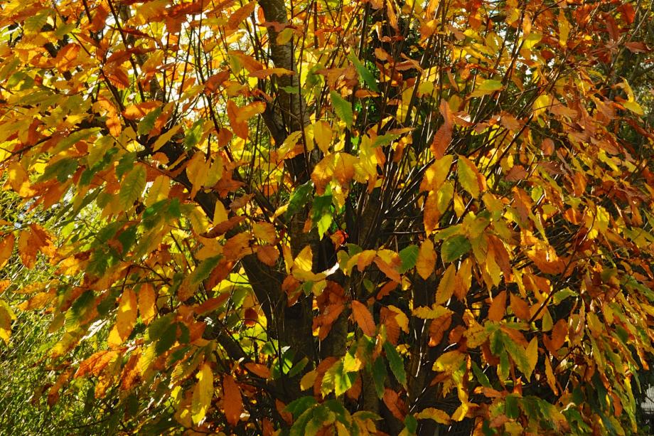 feuilles-mortes-arbre_8405999