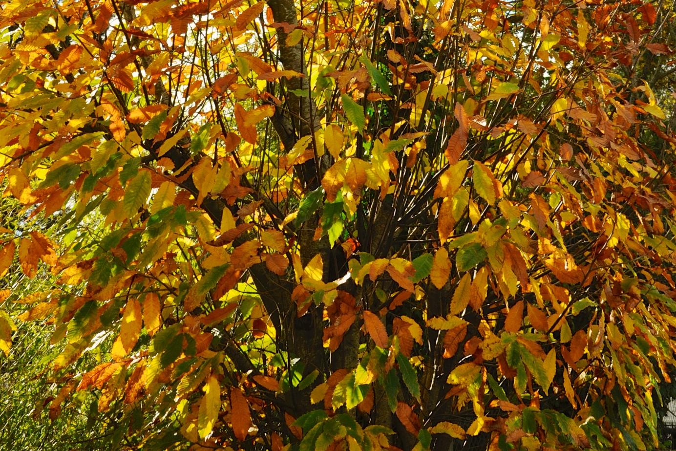 feuilles mortes arbre