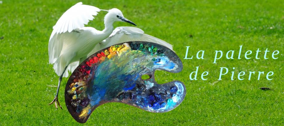 palette oiseau printemps
