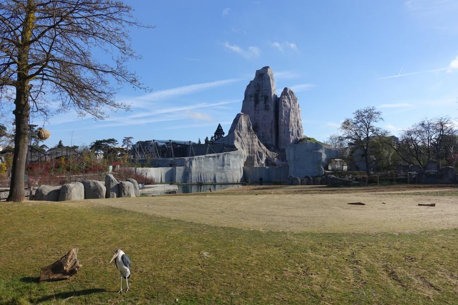 Parc_Zoologique_de_Paris_(Zoo)_@_Paris_(25743467773)