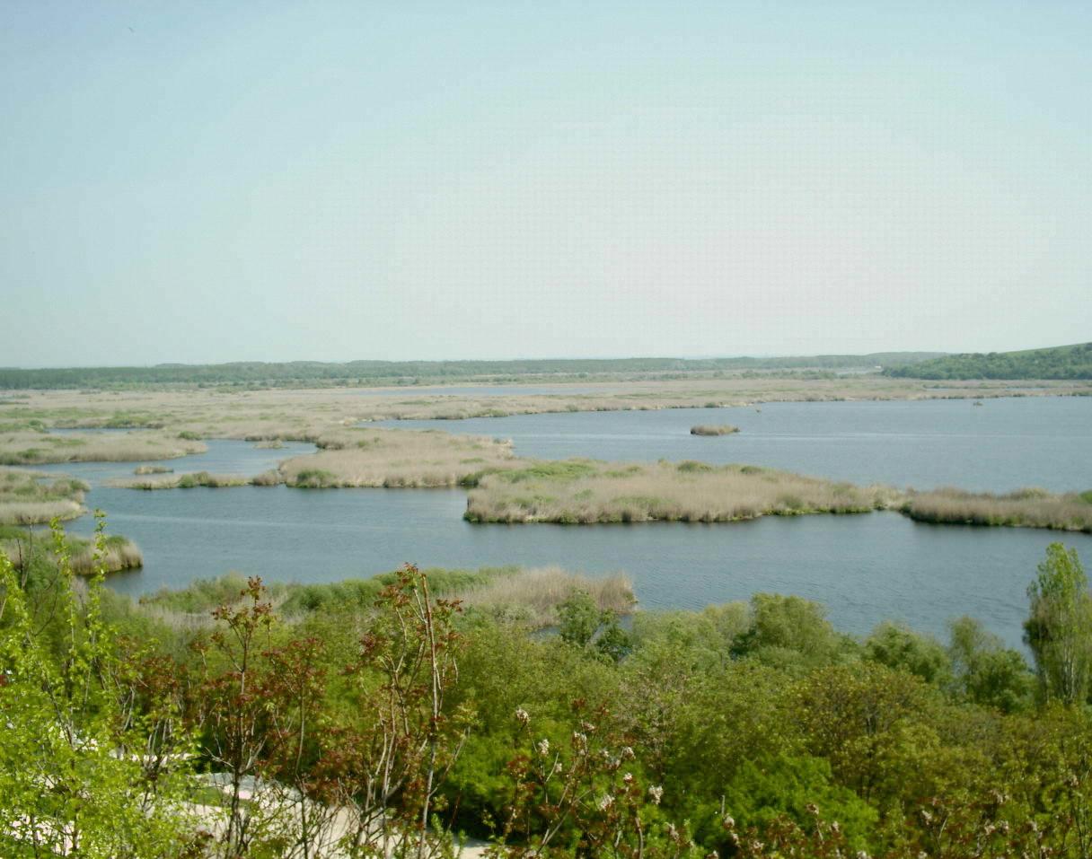Pelican_area_Silistra2