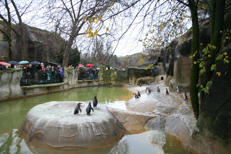Penguins_in_the_zoo_of_vincennes