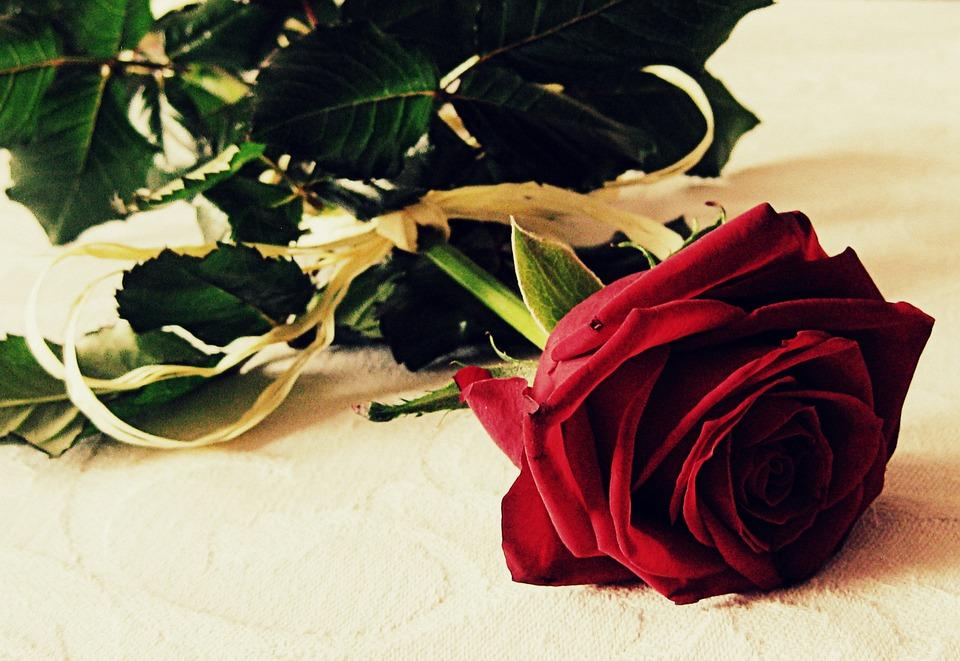 rose-459295_960_720.jpg