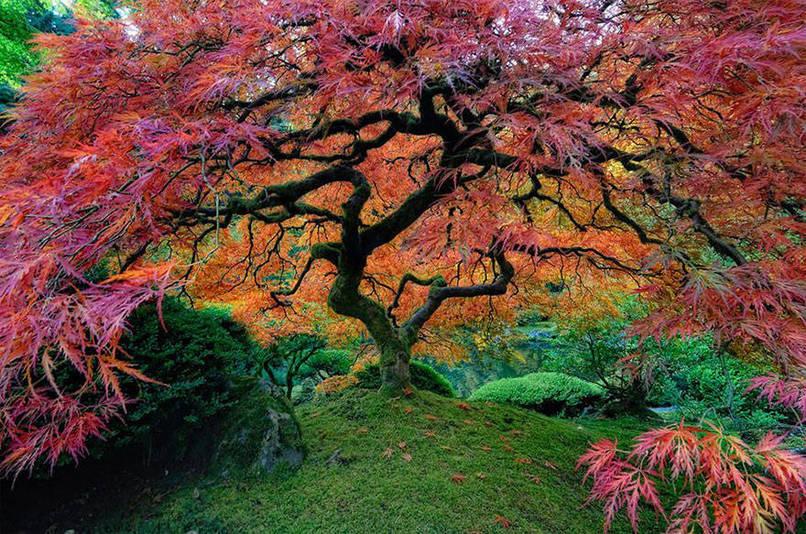 beaux-arbres-5.jpeg