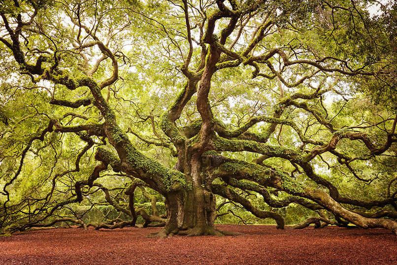beaux-arbres-6.jpeg