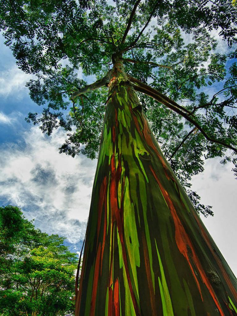 beaux-arbres-3-767x1024.jpeg