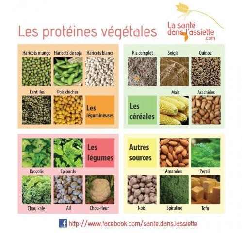 protéines vg.jpg