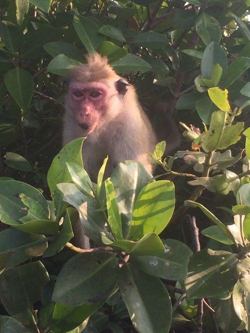 14 fev - balade en bateau Negombo (8).JPG