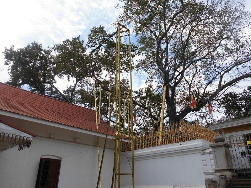 16 fev - bodhi tree (3).jpg