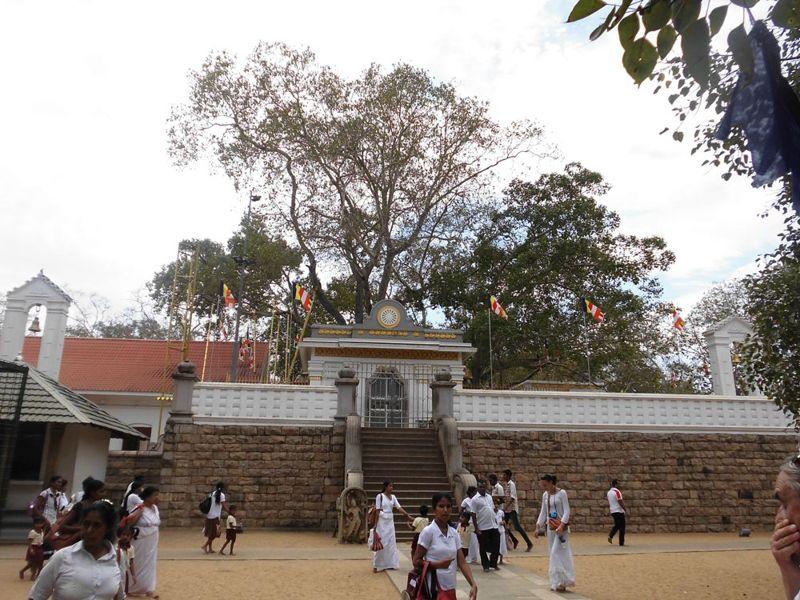 16 fev - bodhi tree (2).jpg