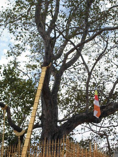 16 fev - bodhi tree (5).jpg