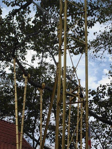 16 fev - bodhi tree (4).jpg