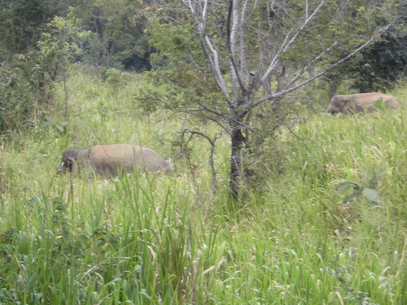 16 fev soir - nos premiers élephants (1).jpg