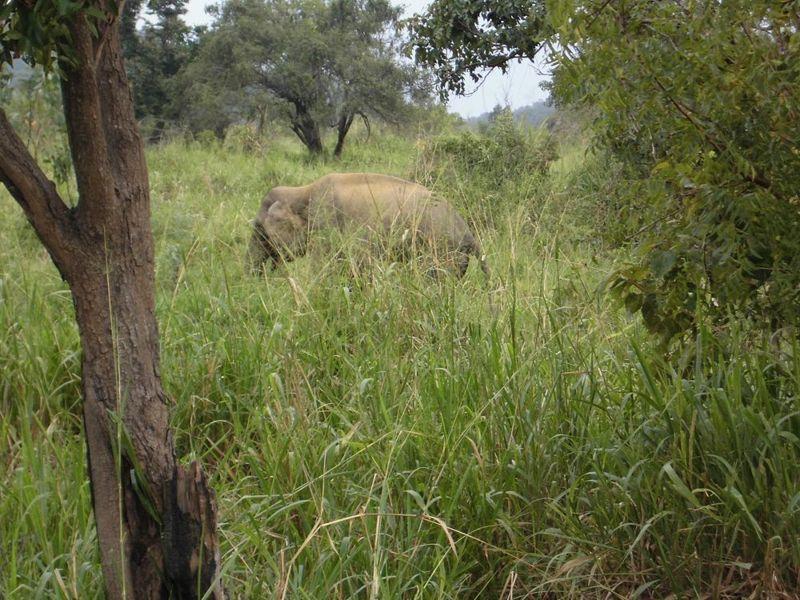 16 fev soir - nos premiers élephants (3).jpg