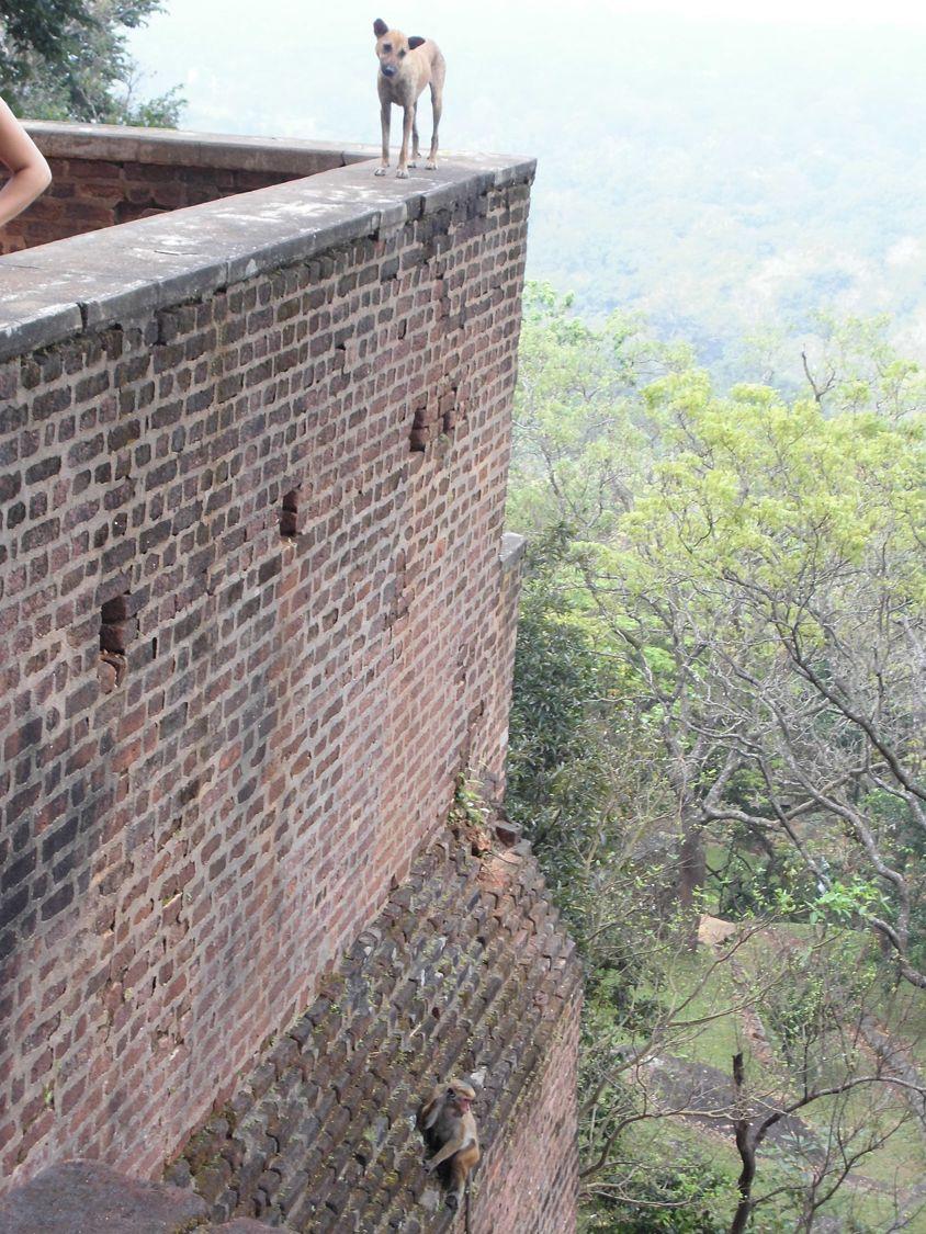 1 matin - Sigiriya lion's rock (44).JPG