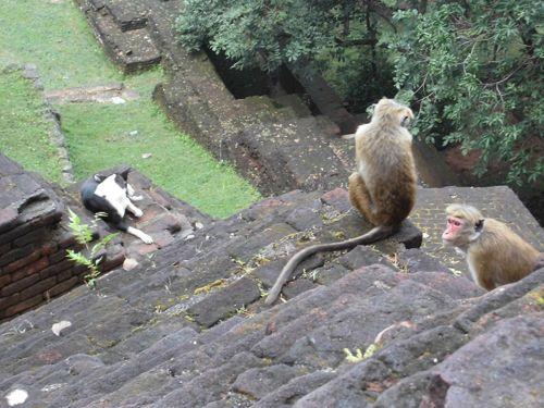 1 matin - Sigiriya lion's rock (50).JPG