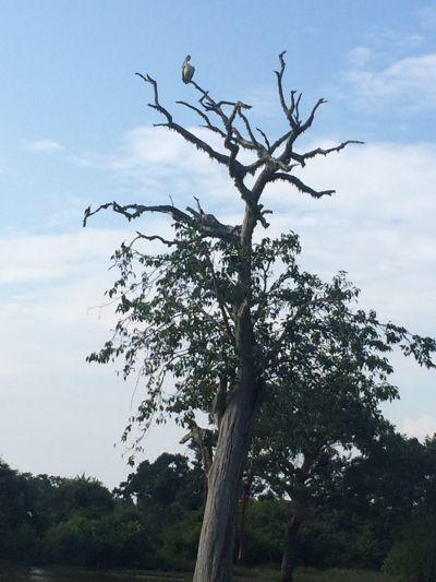 20 fev - Safari au parc Yala (19).JPG