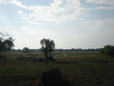 20 fev - Safari Yala (16).JPG