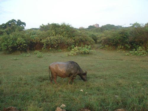 20 fev - Safari Yala (25).JPG