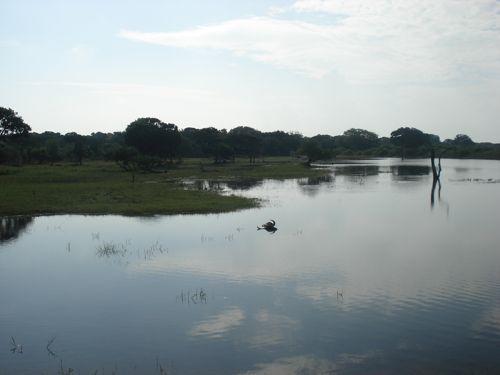 20 fev - Safari Yala (13).JPG
