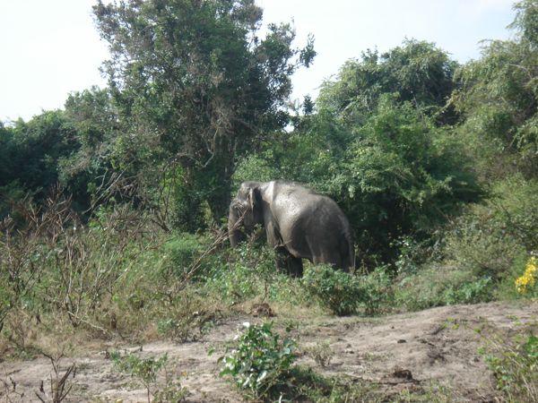 20 fev - Safari Yala (9).JPG