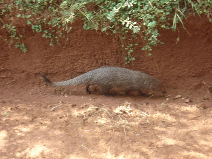 20 fev - Safari Yala (7).JPG