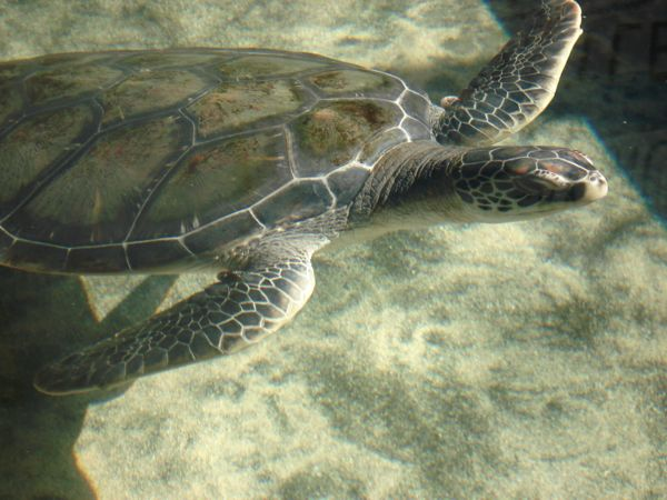 23 fev les tortues (2).JPG