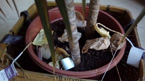 arroser plantes (1).jpg