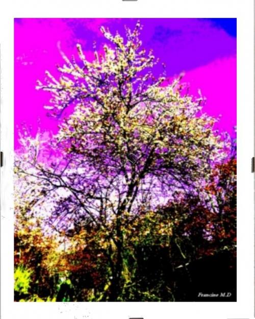 FMD08 L'arbre.jpg