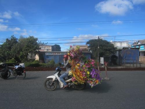 8. fleurs.JPG