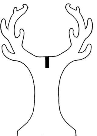 arbre face 2.jpg